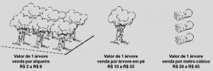 rio_capim2002