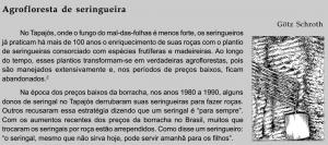 seringueira_agrofloresta