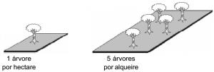 seringueira_densidade