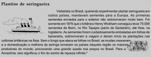 seringueira_plantio