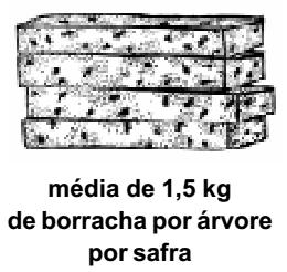 seringueira_producao