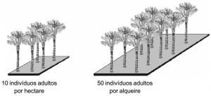tucumaAM_densidade