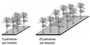 tucuma_densidade