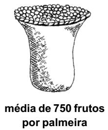 tucuma_producao