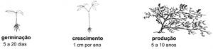 unhadegato_manejo