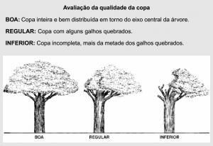 cap2_fig12_Classificacao