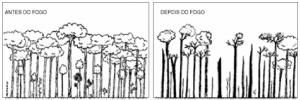 cap9_fig3_Floresta