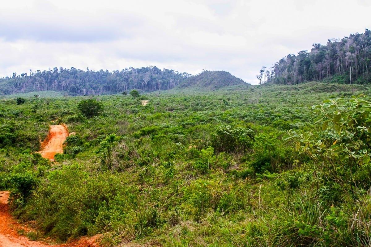 imagem do dia pasto paragominas - #ImagemDoDia: Quem mais desmata a Amazônia?