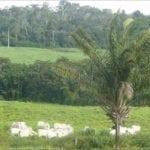 bbc 1 150x150 - Brazil's Amazon rainforest farmers debate new land law