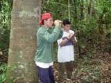 a expansao do manejo florestal - A expansão do manejo florestal comunitário na Amazônia Brasileira: oportunidades e limites.