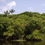 deficiencias na governancia de fundos ambientais 150x150 - Deficiências na governança de fundos ambientais e florestais no Pará e Mato Grosso