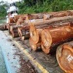 16nov2012 150x150 - #ImazonNaMidia: Estudo do Imazon sobre exploração madeireira na Amazônia é destaque no site Amazônia Real