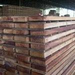 artigocie151 150x150 - As vantagens da colheita planejada de madeira na Amazônia