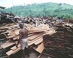 artigocie17 150x120 - Dinâmica de florestas manejadas e sob exploração convencional na Amazônia Oriental