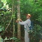 artigocie38 150x150 - Identifying bias in stand-level growth and yield estimations: a case study in eastern Brazilian Amazonia.