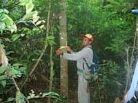 artigocie38 - Zoneamento de Áreas para manejo florestal no Pará.