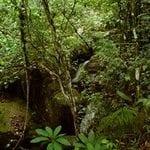 livros10 150x150 - As florestas nacionais na Amazônia: uma consulta a empresários madeireiros e a atores afins à política florestal. Relatório Técnico.