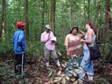 o_manejo_florestal_como_estrategia