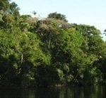para 85 novo codigo 150x138 - Para 85%, novo Código Florestal deve priorizar florestas e rios.