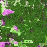 tecnico10 150x150 - Monitoramento de indicadores de manejo florestal na Amazônia Legal utilizando sensoriamento remoto