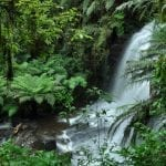 unidades conservacao 1 150x150 - Brazil has lost 5.2 million hectares of Conservation Units