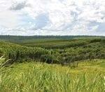 analise termos de ajustamento de conduta 150x131 - Análise de termos de ajustamento de conduta para a recomposição de passivo ambiental de imóveis rurais no Pará