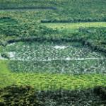 areas protegidas criticas na amazonia legal 150x150 - Áreas Protegidas Críticas na Amazônia Legal