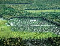 areas_protegidas_criticas_na_amazonia_legal