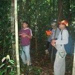 artigocie243 150x150 - Algunas pautas sencillas de manejo puden ayudar en la ordenación sostenible de la caoba de hoja grande en los neotrópicos.