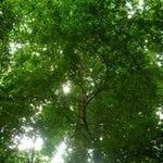 bosque para siempre 150x150 - Bosque para Siempre: Manual para la Producción de Madera en la Amazonía.