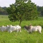 como desenvolver a economia rural 150x150 - Como desenvolver a economia rural sem desmatar a Amazônia?