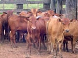 congresso131 - Will cattle ranching continue to drive deforestation in the Brazilian Amazon?