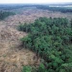 deforestation surinami 1 150x150 - Clark Labs and Imazon Assist Conservation International in the Provision of Training and Production of Spatial Models of Future Deforestation in Suriname