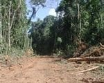 enforcement against 150x120 - Enforcement against illegal logging in the Brazilian Amazon.