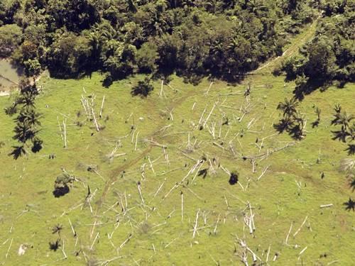 grileiros 1 - Corrida de grileiros acelera desmatamento no Mato Grosso