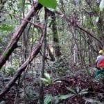 image 210 150x150 - Taller de manejo comunitario y certificacion forestal en Latinoamérica: Resultados y propuestas.