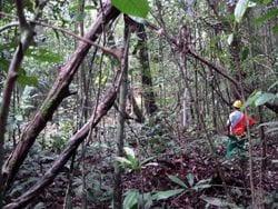 image 210 - Taller de manejo comunitario y certificacion forestal en Latinoamérica: Resultados y propuestas.