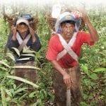 image85 150x150 - Resumo Executivo do Plano de Manejo da Floresta Estadual do Paru
