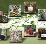 iniciativas de manejo florestal comunitario e familiar na amazonia brasileira 150x145 - Iniciativas de Manejo Florestal Comunitário e Familiar na Amazônia Brasileira 2009/2010