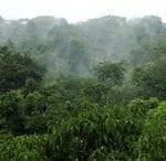 oferta e demanda de areas para manejo 150x146 - Oferta e demanda de áreas para manejo florestal no Estado do Pará