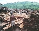 reducing waste during1 150x120 - Reducing waste during logging and log processing: forest conservation in eastern Amazonia.