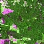 satellite images for evaluating 150x150 - Satellite Images for Evaluating Forest Management Plans.