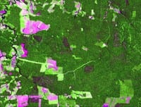 satellite images for evaluating - Satellite Images for Evaluating Forest Management Plans.