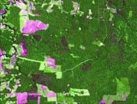 tecnico102 - Comparação entre imagens Landsat e MODIS para detecção de incrementos de desmantamento: um estudo de caso na região do Baixo Acre