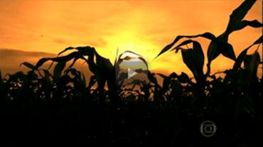 g1 1 - Luta contra o desmatamento é dura em São Félix do Xingu, no PA