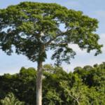 wilsoncabral 150x150 - O risco de desmatamento associado a doze hidrelétricas na Amazônia