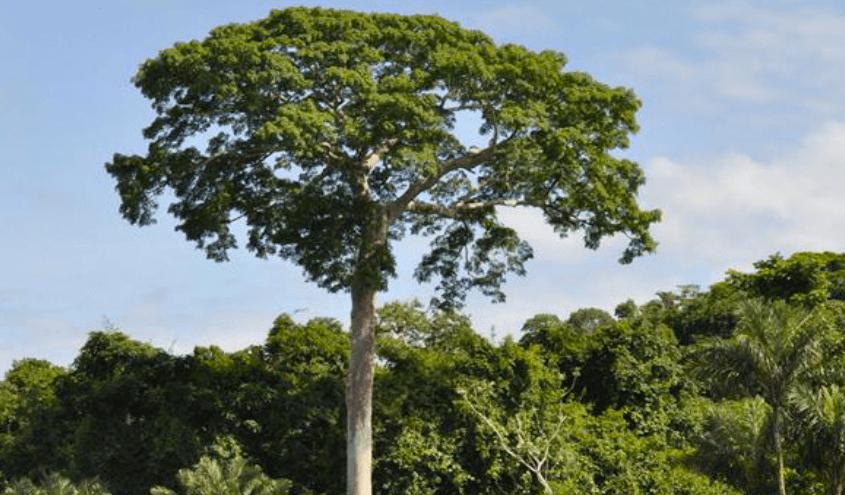 wilsoncabral 845x495 - O risco de desmatamento associado a doze hidrelétricas na Amazônia