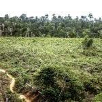 pasto sujo 1 paulo barreto 1 150x150 - Falhas na arrecadação de imposto sobre a terra facilitam especulação e desmatamento na Amazônia