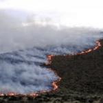 bolivia 1 150x150 - Estudio revela que Bolivia pierde 1,8 millones de hectáreas de bosque por deforestación