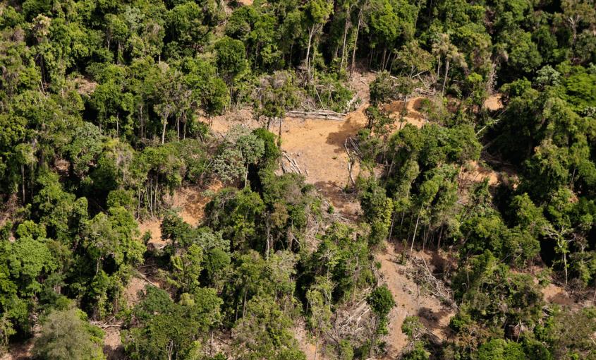 Captura de Tela 2016 07 08 às 10.10.56 845x510 - Estudo aponta que combater apenas o desmatamento não é suficiente para conservar a biodiversidade da Amazônia